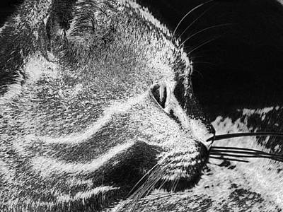 Digital Art - Cat Tiger Animal Domestic Cat  by PixBreak Art