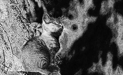 Digital Art - Cat Young Animal Curious Wildcat  by PixBreak Art