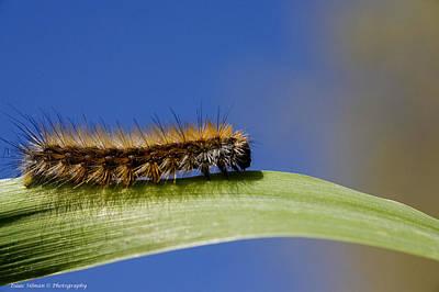Photograph - Caterpillar by Isaac Silman
