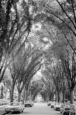 Photograph - Cathedral Of Trees by Mike Evangelist