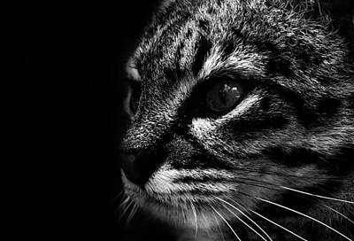 Striking Photograph - Cats Eyes by Martin Newman