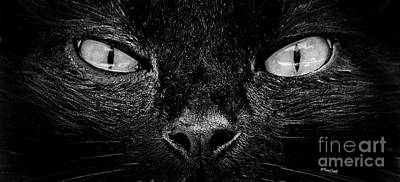 Photograph - Cat's Eyes by Terri Mills