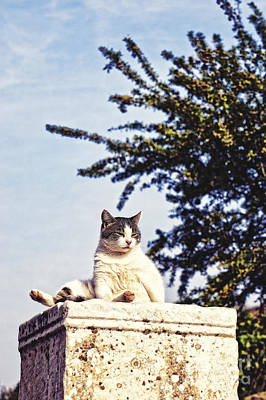 Ephesus Photograph - cats of Ephesus by HD Connelly