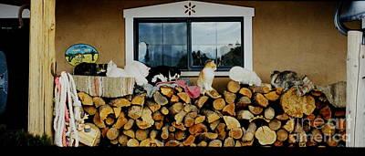 Photograph - Cats - Porch Sitting by Jacqueline M Lewis