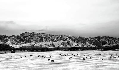 Photograph - Cattle Grazing In Winter Valley - Fort Collins, Colorado by Unsplash