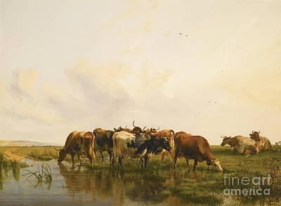 Cattle In Canterbury Meadows Art Print