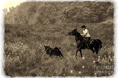 Photograph - Cattle Round Up And Drive In West Virginia by Dan Friend