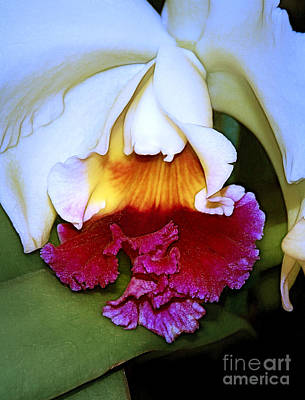 Photograph - Cattleya by Judi Bagwell