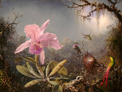 Cattleya Orchid And Three Hummingbirds Art Print by Martin Johnson Heade