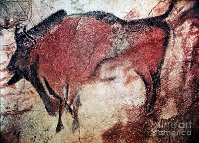 Photograph - Cave Art by Granger