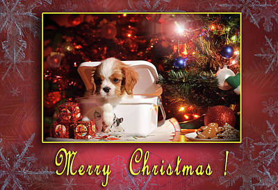 Photograph - Cavie Christmas Greeting Card by Waldek Dabrowski