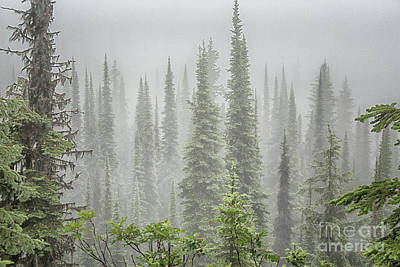 Bookmarks Wall Art - Photograph - Cedars In Fog by Patricia Hofmeester