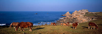 Celtic Horses On The Shore, Finistere Art Print by Panoramic Images