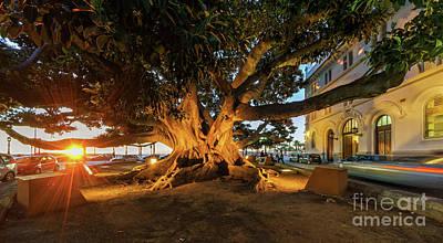 Photograph - Centennial Ficus Tree At Business Faculty Cadiz Spain by Pablo Avanzini