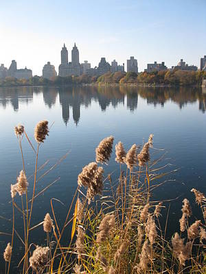 Park Photograph - Central Park by Yannick Guerin