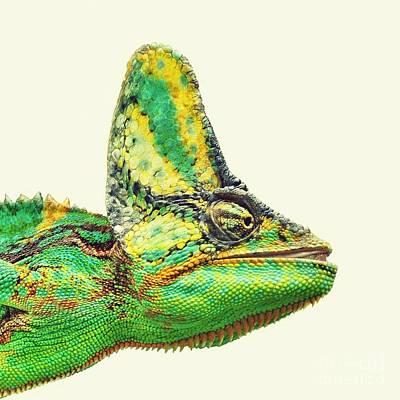 Chameleon Photograph - Chameleon by MingTa Li