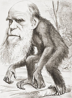 Charles Darwin 1809 - 1882. English Art Print