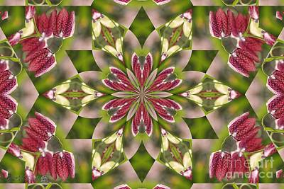 Digital Art - Checkered Lilies Mandala by J McCombie