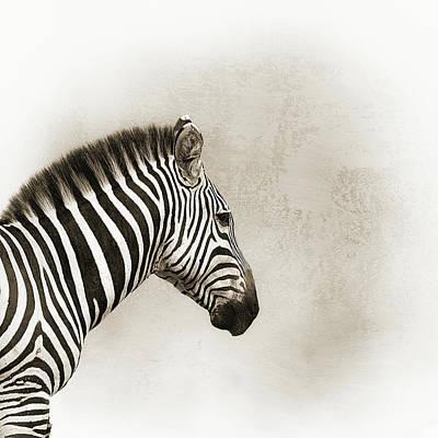 Photograph - Cheetah Sepia Closeup Square by Susan Schmitz