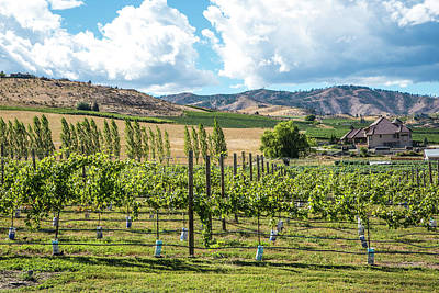 Photograph - Chelan Vineyard In September by Tom Cochran