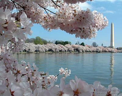 Cherry Blossom Festival Art Print