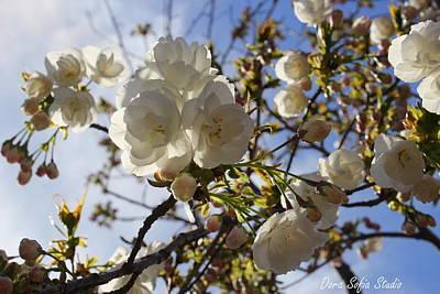 Photograph - Cherry Blossoms And Blue Skies by Dora Sofia Caputo Photographic Design and Fine Art