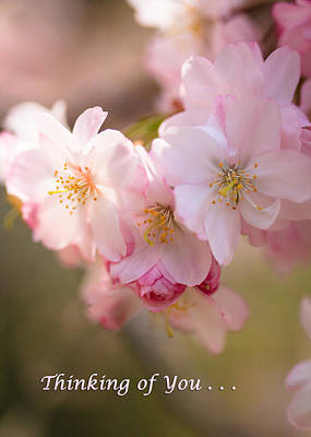 Photograph - Cherry Blossoms Thinking Of You by Joni Eskridge