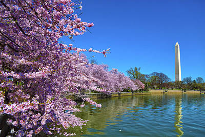Art Print featuring the photograph Cherry Blossoms by Mitch Cat