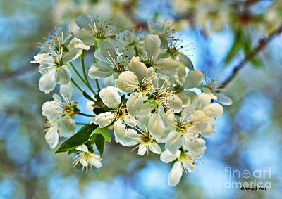 Photograph - Cherry Tree Flowers by AmaS Art