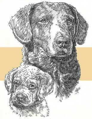 Mixed Media - Chesapeake Bay Retriever by Barbara Keith