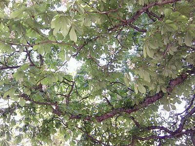 Photograph - Chestnut 1099 by Julia Woodman