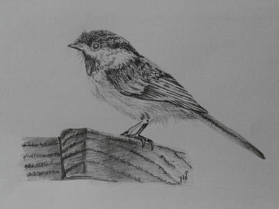 Chickadee Drawing - Chickadee Bird by Maria Woithofer