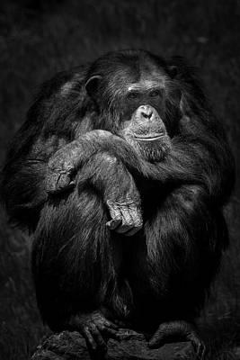 Kitchen Mark Rogan - Chimpanzee by Hristo Shanov