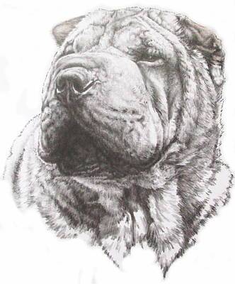 Drawing - Chinese Shar Pei by Barbara Keith