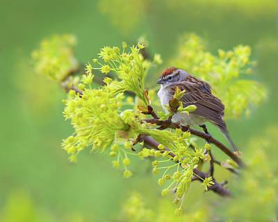 Photograph - Springtime Reverie by Bernard Lynch