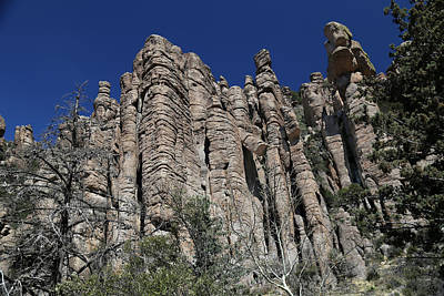 Photograph - Chiricahua Nat Monument Tuft 2 by Mary Bedy