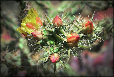 Photograph - Cholla Cactus Flowers by Elaine Malott