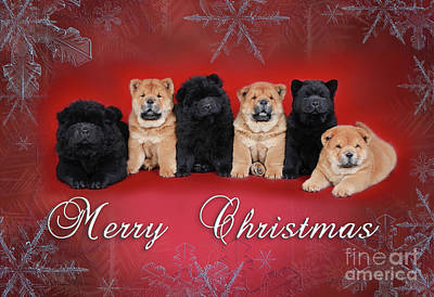 Photograph - Chow Chow Christmas Card by Waldek Dabrowski