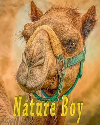 Photograph - Nature Boy Camel by LeeAnn McLaneGoetz McLaneGoetzStudioLLCcom