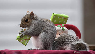 Photograph - Christmas Squirrel by Diane Giurco