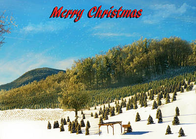 Photograph - Christmas Tree Farm by Susan Leggett