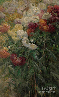 Art In The Garden Painting - Chrysanthemums In The Garden At Petit-gennevilliers by Gustave Caillebotte