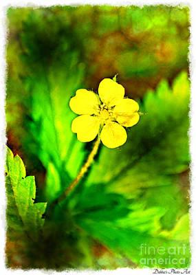 Photograph - Cinquefoil Wildflower by Debbie Portwood