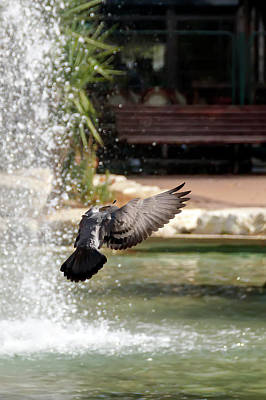 Western Art - City pigeons in flight by Emma Grimberg