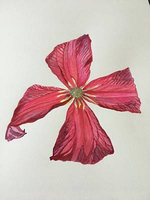 Painting - Clematis by Marina Garrison