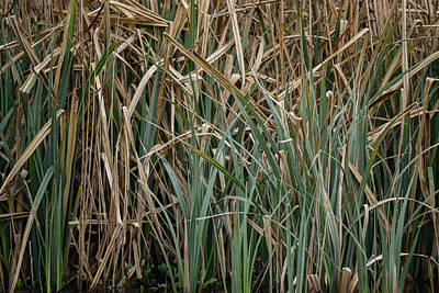 Etail Photograph - Close Up Image Of Reeds In Water During Spring by Matthew Gibson