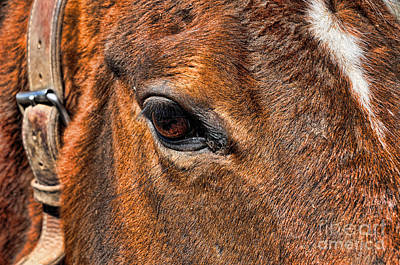 Close Up Of A Horse Eye Art Print by Paul Ward