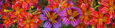In Bloom Photograph - Close-up Of Flowers In Bloom by Panoramic Images