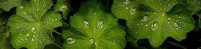 Close-up Of Raindrops On Green Leaves Art Print by Panoramic Images