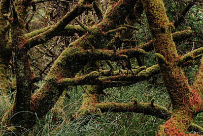 Photograph - Coastal Forest  by Lost River Photography